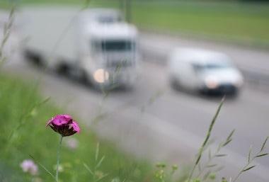 Umweltzonen im Ausland auf vielbefahrenen Straßen